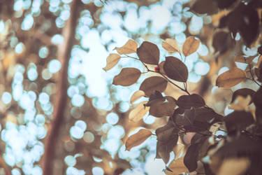 leaves #2 by KhaledReese