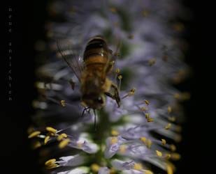 Honeyblue by grabraeuber68