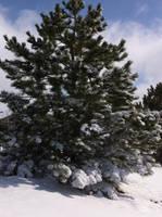 Winter Tree by ZeitlosLotus