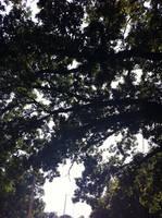 Bored Tree by ZeitlosLotus