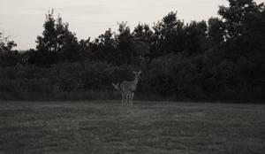 Doe Deer by snacksforyaks
