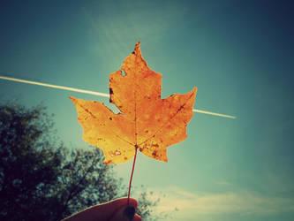Leaf Covered Sun- Day 252 by TiiaBear