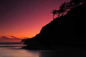 Cannon Beach - Tree silhouette by pyro303