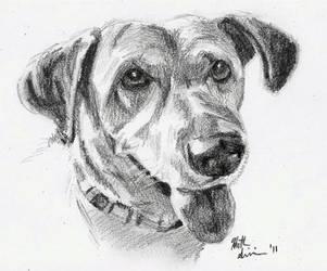Dog Sketch #2 by H-Heather