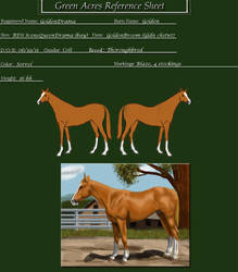 GoldenDrama 1 year old by tarot020