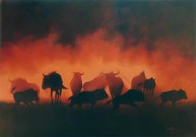 Wildebeest in the dust by petercmatthews