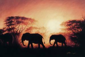 Elephants at sunset by petercmatthews