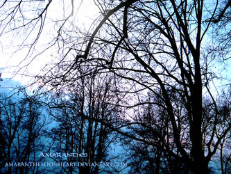Trees by AmaranthesLionHeart