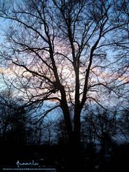 Trees II by AmaranthesLionHeart