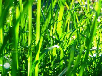 Grass 1 by AmaranthesLionHeart