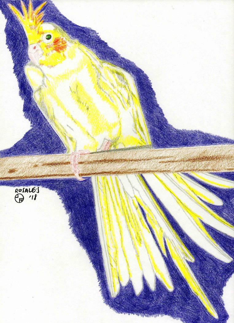 Cockatiel TJ Drawing by ArtSpillGalaxy