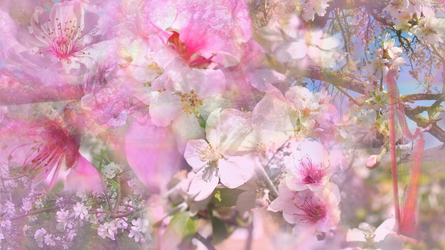 Waltz of the Blossoming Trees by RebeccaTripp
