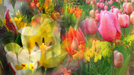 Waltz of the Tulip by RebeccaTripp