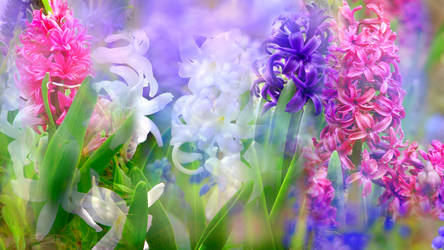 The Waltz of the Hyacinth by RebeccaTripp