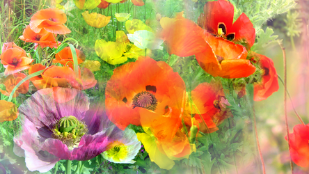 The Waltz of Poppies by RebeccaTripp