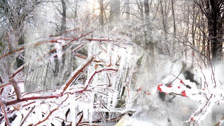 Winter by RebeccaTripp
