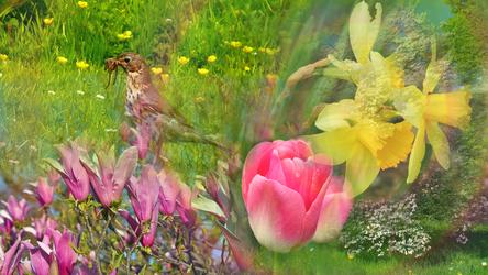 Spring by RebeccaTripp