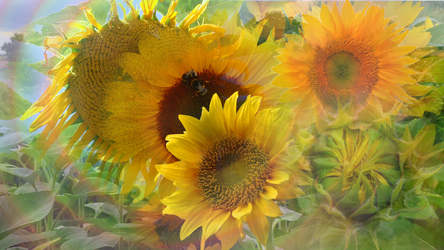 Waltz of the Sunflower by RebeccaTripp
