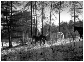 in light by equusrevelrous