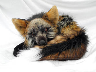Fluffy Fireball Fox by TeeganPurrington