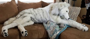 Life-Size Arctic Wolf Plush by TeeganPurrington