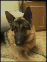 .:my dog:. by Develishious