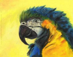 Macaw by Rahmschnitzel