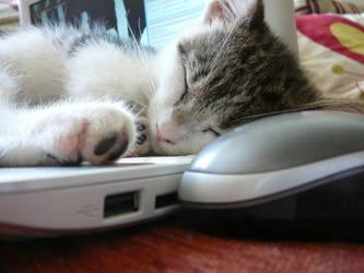 IT Cat by Kath-Lin