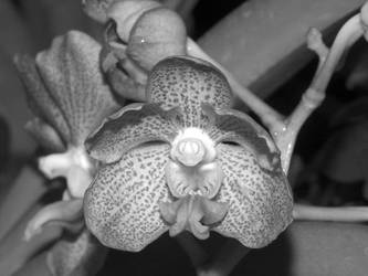 Colourless Flower by torchboy