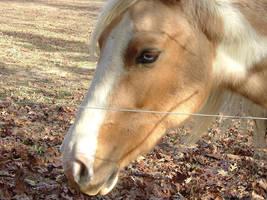 Horse by GlowsInTheDark