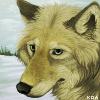 Koa Portrait 2018 by Koahara