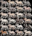 #Appaloosa Adoptables - OPEN [18/24] by PinkPlushChicken