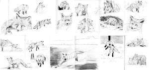 Fox sketches by Lady-Natsuki