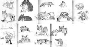 Fox sketches (2) by Lady-Natsuki