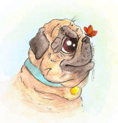 Pug and butterfly by LindseyBell