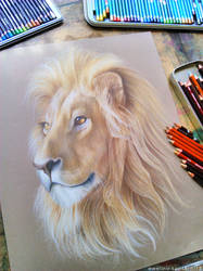 Lion by Kot-Filemon