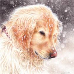 Winter dog by Kot-Filemon
