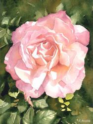 Rose watercolour by Kot-Filemon