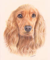 Cocker Spaniel Portrait by Kot-Filemon