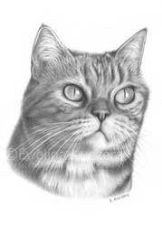 Cat's graphite portrait by Kot-Filemon