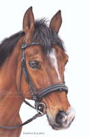 Horse portrait by Kot-Filemon