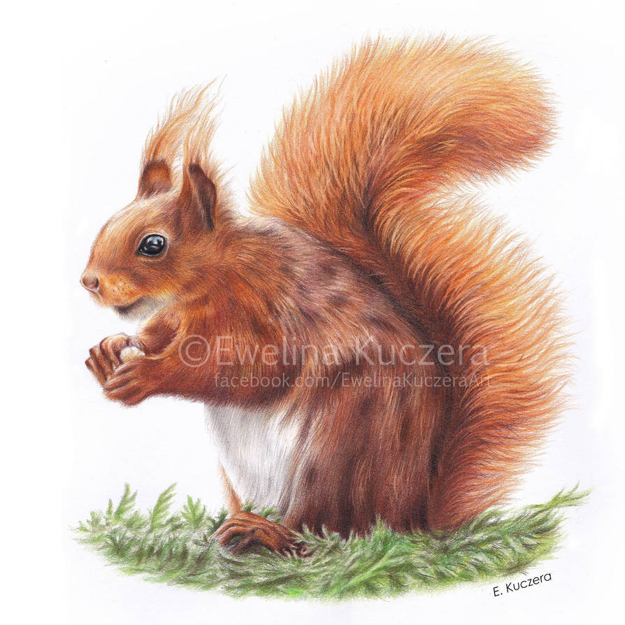 Squirrel drawing by Kot-Filemon