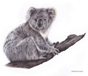 Koala Drawing by Kot-Filemon