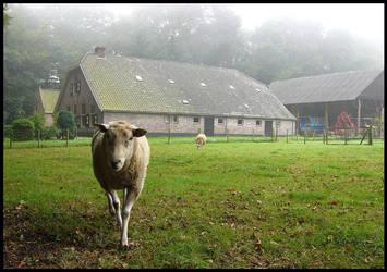 A Dutch farm with sheep by Esperimenti