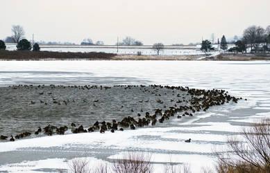 Flock by DwayneF
