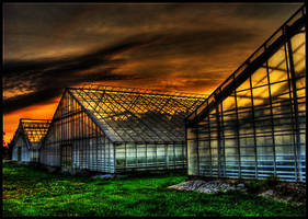 Colour Plantage by CityLover
