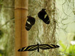 Three Butterflies by Hansmar