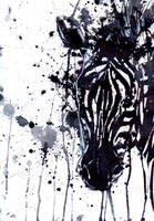 zebra by sashaZavisha