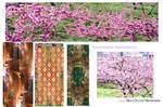 Impermanence in Springtime by sammlea