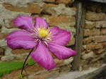 Purple Flower by Joannyta
